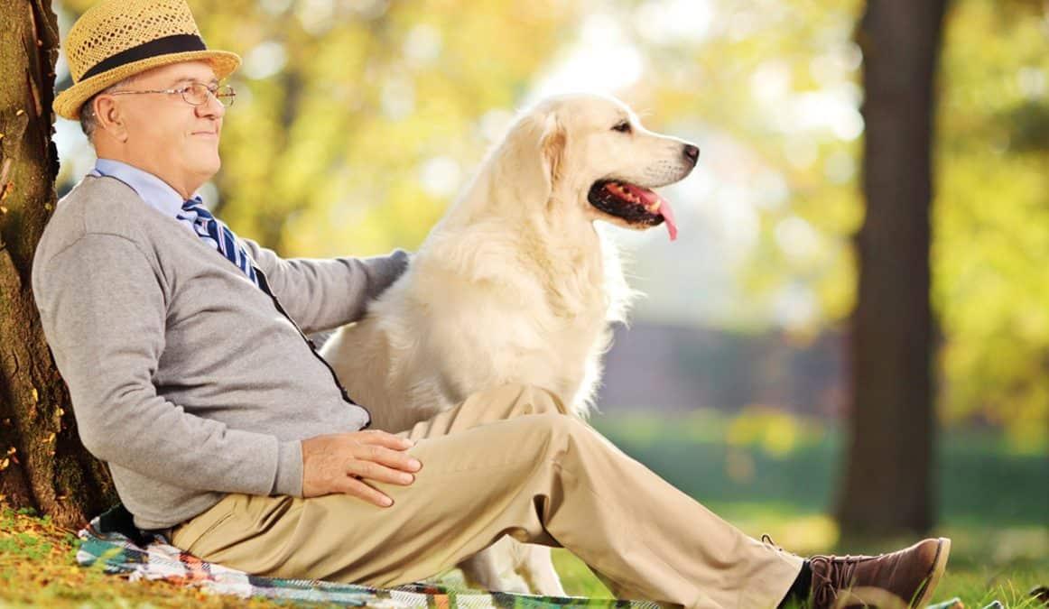 Собакотерапия (канистерапия) в гериатрии