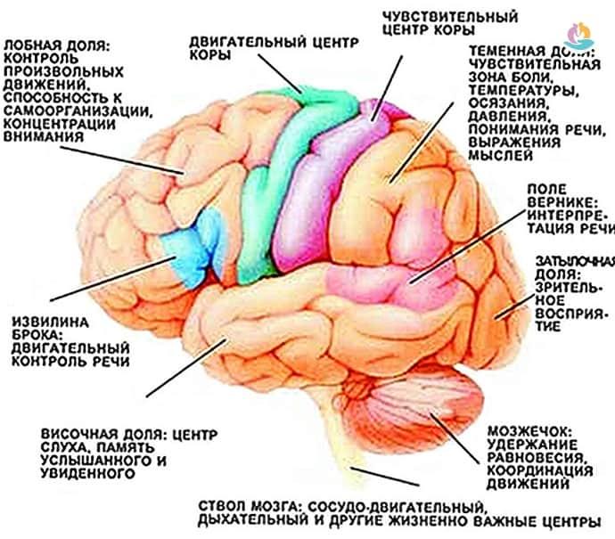 Опасность ишемического инсульта